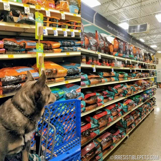 Chuy Shopping at PetSmart