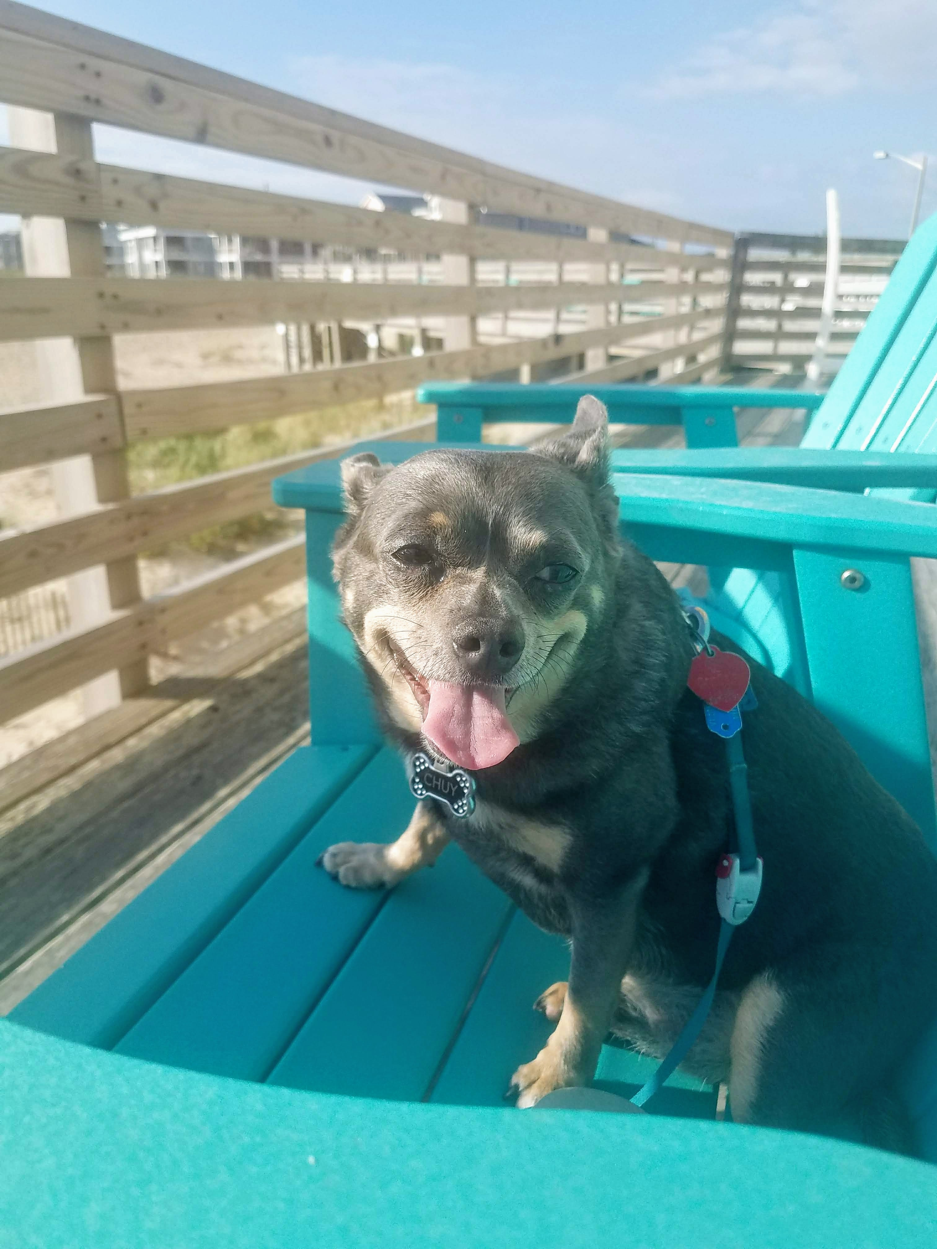 Dog Friendly Nags Head Hotel Deck