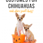 Halloween costume ideas for Chihuahuas and other small dogs #halloween #halloweendogcostumes