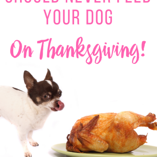 5 Things You Should Never Feed Your Dog on Thanksgiving