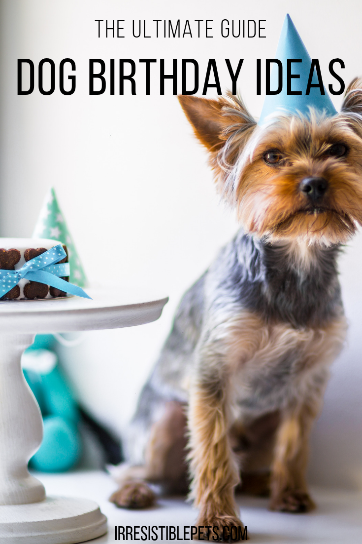Dog Birthday Ideas
