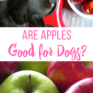 Are Apples Good for Dogs?
