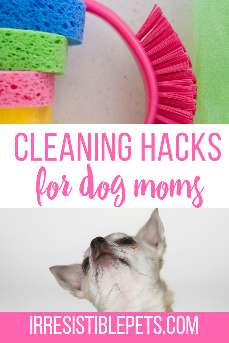 Cleaning Hacks for Dog Moms