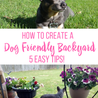 5 Ways to Create a Dog Friendly Yard