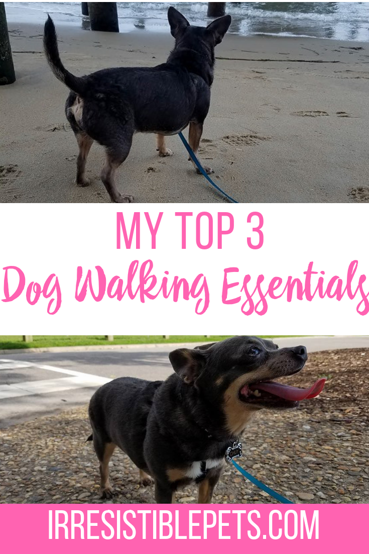 irresistible pets on feedspot rss feedas a dog mom, i\u0027ve learned to keep a few dog walking essentials on hand to make our walks easier and fun