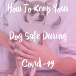 How To Keep Your Dog Safe During Covid-19